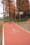 Droga dla jogging przy Shanghai jesieni miasta parkiem Obrazy Stock
