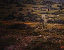 droga do drzewa Obraz Royalty Free