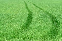 droga do trawy Zdjęcie Royalty Free