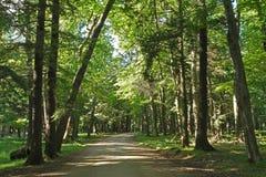 Droga Gruntowa bieg Przez Głębokiego lasu Zdjęcie Stock