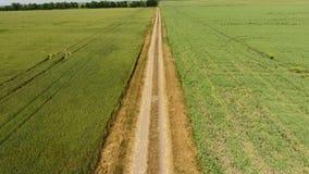 Droga gruntowa między dwa polami Grochu śródpolny i pszeniczny pole Odgórny widok pszeniczny pole Latać nad pszenicznym polem zdjęcie wideo