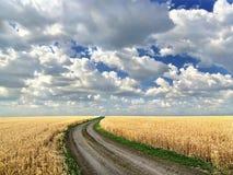Droga gruntowa po środku pszenicznego pola obraz stock