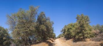 Droga Gruntowa przez Kalifornia drewien Zdjęcia Stock