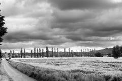 Droga gruntowa przez pszenicznych poly Obraz Stock