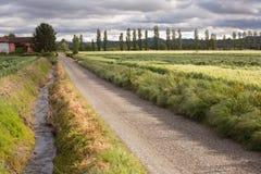 Droga gruntowa przez pszenicznych poly Fotografia Royalty Free