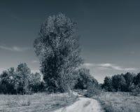 Droga gruntowa w deciduous lasu monochromu fotografii Obraz Stock