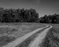 Droga gruntowa w deciduous lasu monochromu fotografii Obrazy Royalty Free