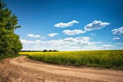 Droga gruntowa w kwiecenia polu, piękna wieś, słoneczny dzień Zdjęcia Stock