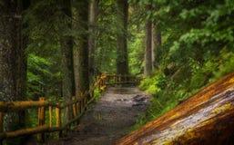 Droga gruntowa w lesie z starym drewnianym ogrodzeniem i nazwa użytkownika przedpole zdjęcia stock
