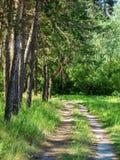 Droga gruntowa w sosnowym drewnie w słonecznym, jasnym wiosna ranku, Zdjęcia Stock