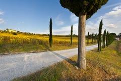 Droga Gruntowa w Tuscany Obrazy Stock
