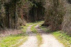 Droga gruntowa znika w lesie zdjęcie royalty free