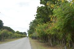 Droga Guihing, Hagonoy, Davao Del Sura, Filipiny obrazy stock