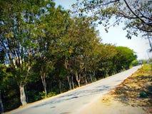 Droga i drzewa w jesieni obraz stock