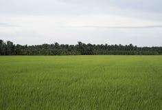 Droga i ricefield z koksem i drzewkami palmowymi obrazy stock