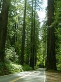 droga leśna Zdjęcie Royalty Free