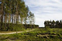 droga leśna Fotografia Royalty Free