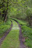 droga leśna obrazy stock