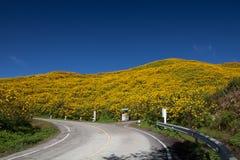 Droga Meksykańskiego słonecznika świrzepa (Tithonia diversifolia) fotografia royalty free