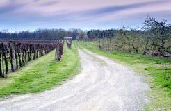 Droga między gronowymi winogradami i jabłoniami Obrazy Royalty Free