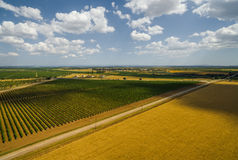 Droga między pszenicznym polem i winnicą Zdjęcia Royalty Free