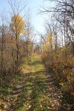 Droga między drzewami Obrazy Royalty Free
