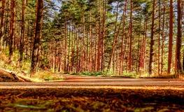 Droga między drzewami Zdjęcia Stock