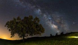 Droga Mleczna i drzewo obraz royalty free