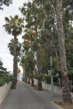 Droga morze z palmami Zdjęcia Royalty Free