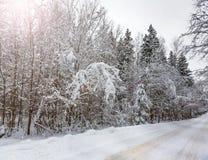 Droga na śnieżystym drewnie Zdjęcia Royalty Free