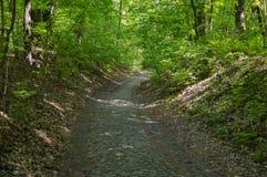 Droga od brukowych kamieni w lesie zdjęcie stock