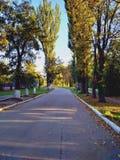 Droga pośród jesieni drzew Jesieni droga w promieniach zmierzch journeyer nowe horyzonty obraz stock