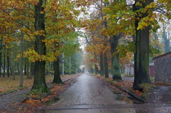 Droga po deszczu Obrazy Royalty Free