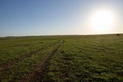 Droga polna przez zielonych trawiastych paśników Obraz Stock