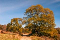 Droga prowadzi między drzewami przez doliny w górach Obrazy Stock