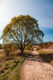 Droga prowadzi między drzewami przez doliny w górach Obraz Royalty Free