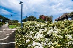 Droga przemian i ogród zdjęcie royalty free