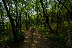 Droga przemian omijanie przez lasu Vetal wzgórze, lokalizującego w Pune obrazy royalty free