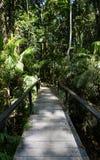 Droga przemian po środku tropikalnego lasu Obrazy Stock
