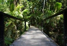 Droga przemian po środku tropikalnego lasu Fotografia Stock