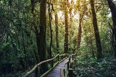 Droga przemian podróży dżungla w Doi inthanoon Obraz Stock