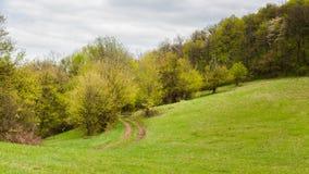 Droga przemian przez łąki Obrazy Royalty Free