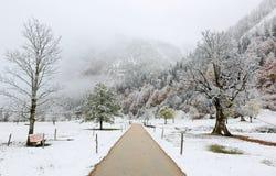 Droga przemian przez łąki z klonowymi drzewami zakrywającymi pierwszy śniegiem na mgłowym ponurym ranku Obraz Royalty Free