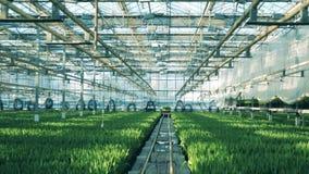 Droga przemian przez greenery wypełniającego z roślinami zbiory wideo