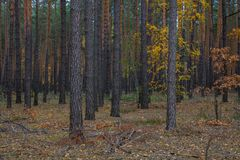 Droga przemian przez jesień lasu zdjęcie stock