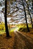 Droga przemian przez jesień lasu Fotografia Stock
