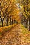 Droga przemian przez jesień parka Zdjęcie Royalty Free