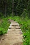 Droga przemian przez lasu Zdjęcie Stock