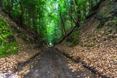 Droga przemian przez lasu Fotografia Stock