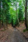 Droga przemian przez lasu Obrazy Stock